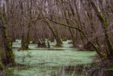 Bogged Down in the Swamp